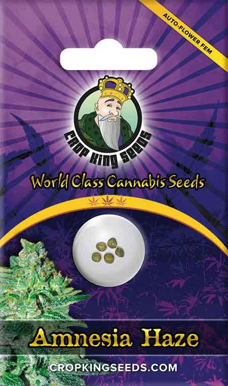 Amnesia Haze Autoflower Seeds