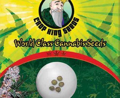 Blue Berry Regular Marijuana Seeds