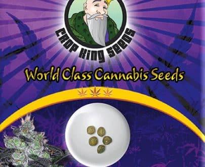 Candy Cane Autoflowering Marijuana Seeds
