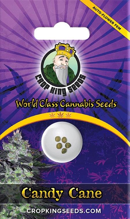 Candy Cane Autoflower Seeds