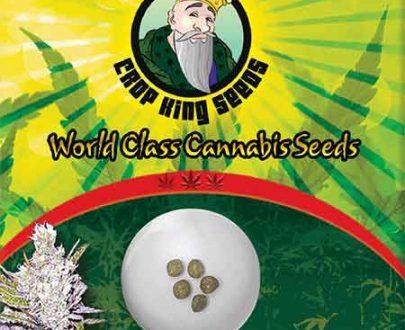 Haze Xtreme Feminized Marijuana Seeds