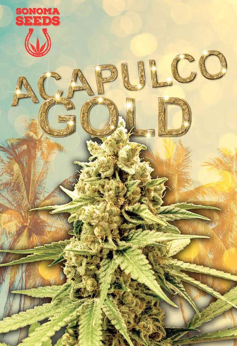 Acapulco Gold Feminized Seeds