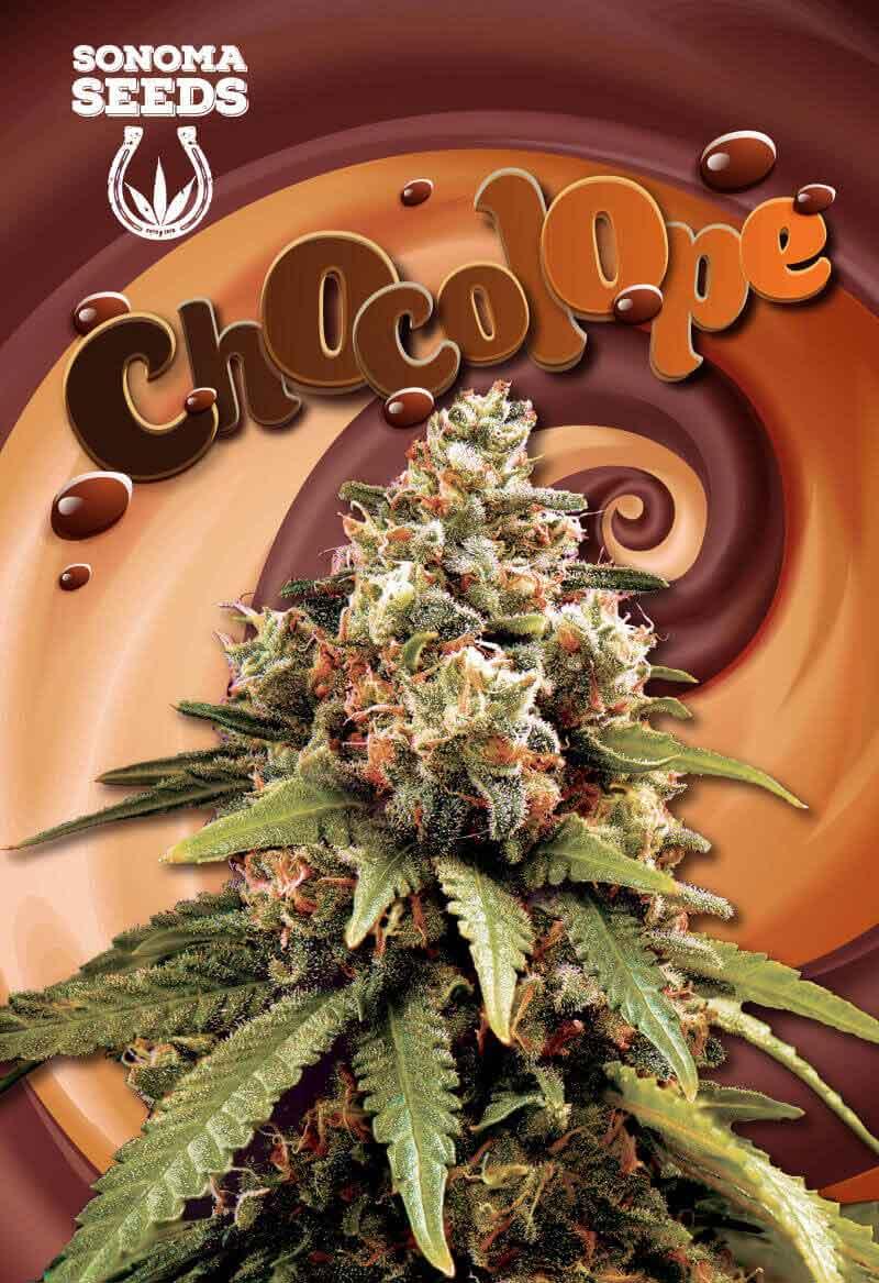 Chocolope Seeds Opts
