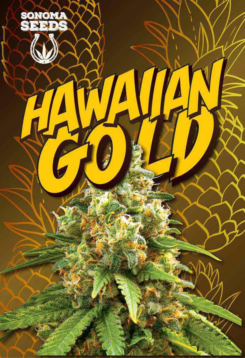 Hawaiian Gold Seeds