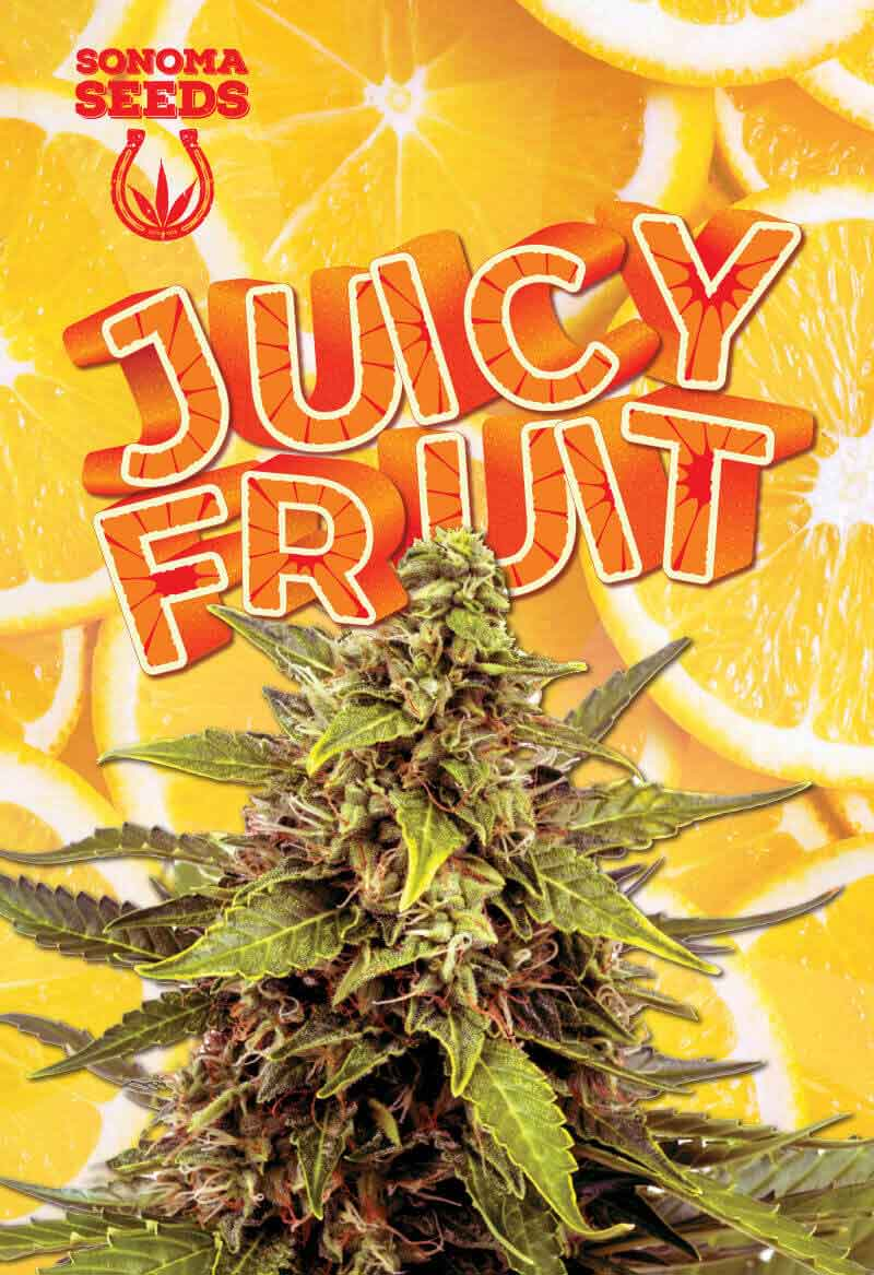 Juicy Fruit Seeds Opt