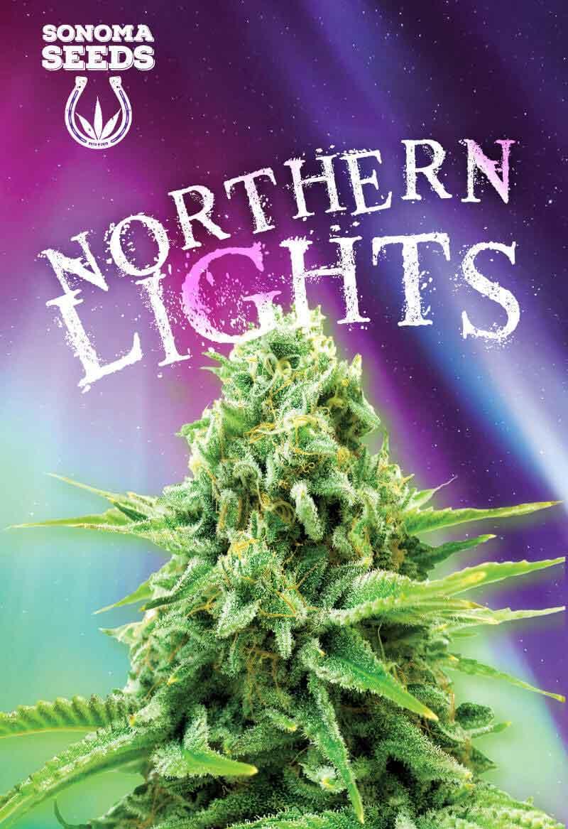 Northern Lights Feminized Seeds