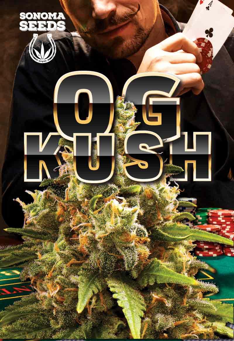 Og Kush Seeds 1