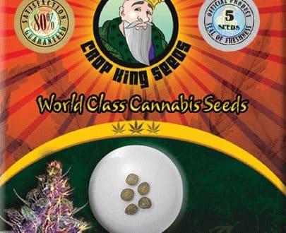 Purple Kush Feminized Seed Opt 405x330