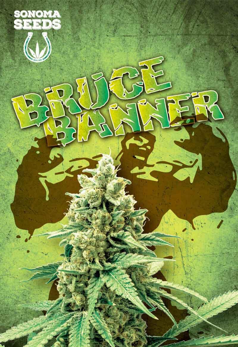 Sonoma Bruce Banner Seeds Opt