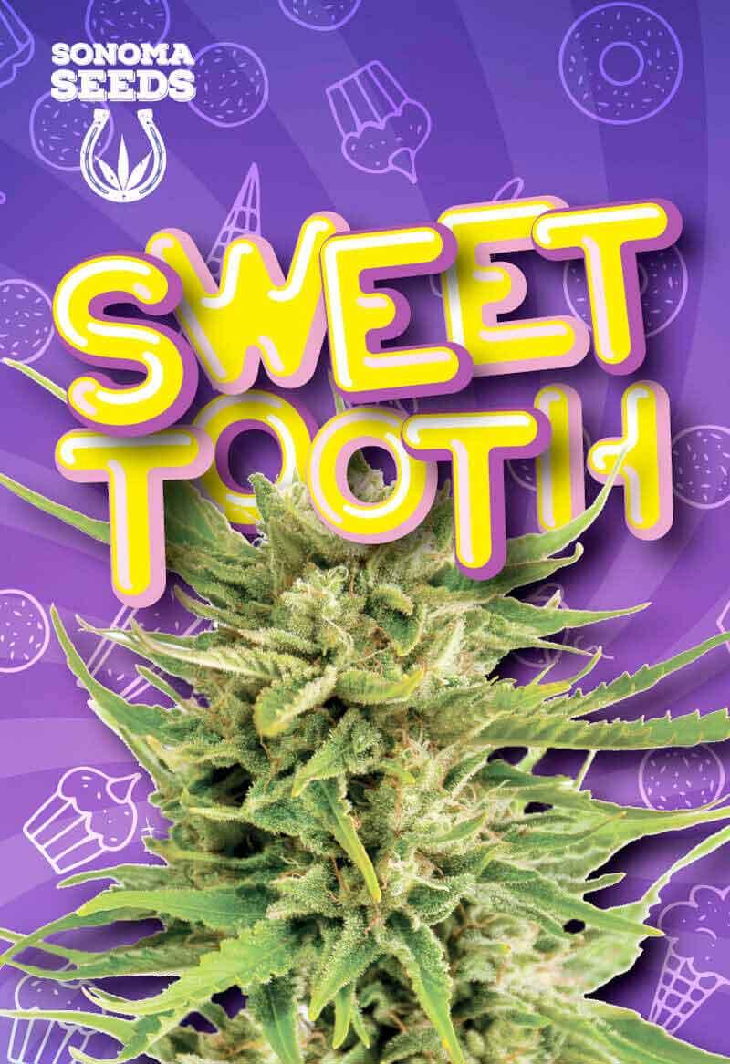 Sweet Tooth Feminized Seeds