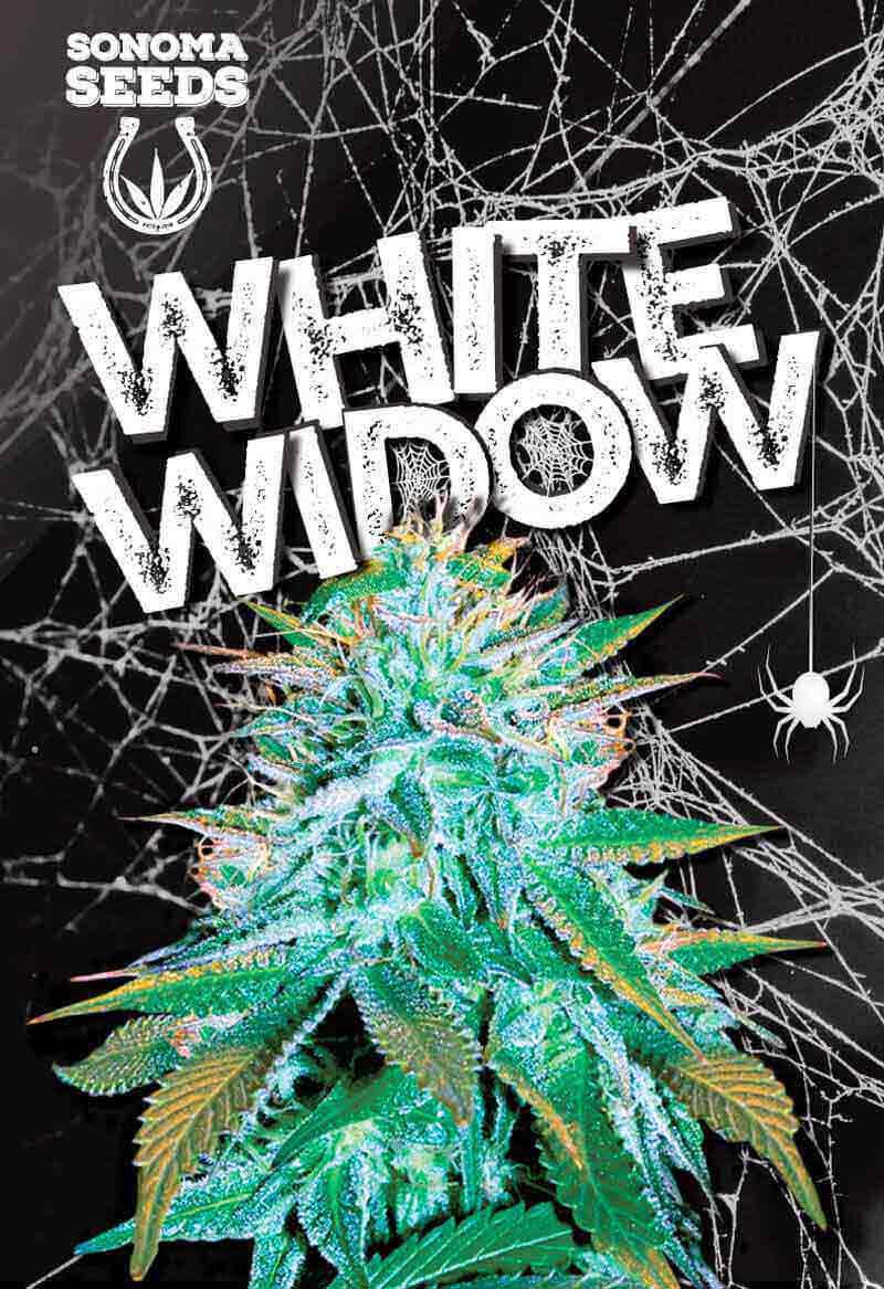 White Widow Autoflower Seeds