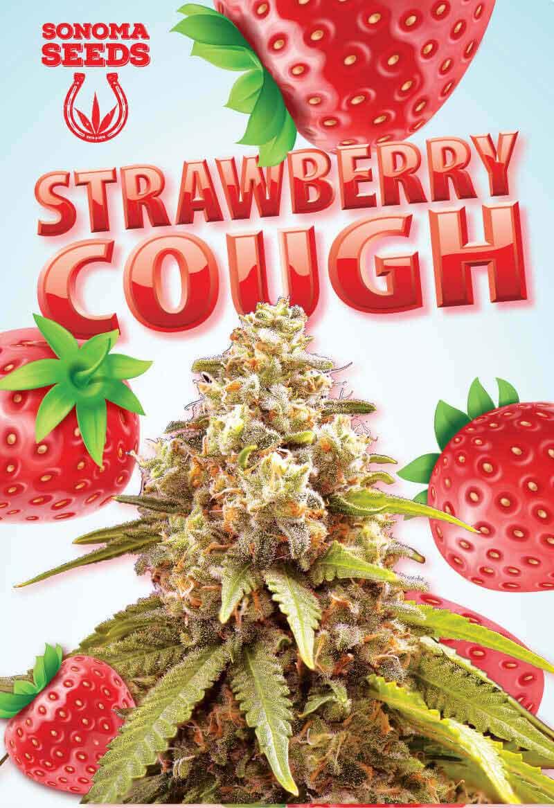 Strawberry Cough Autoflower Seeds