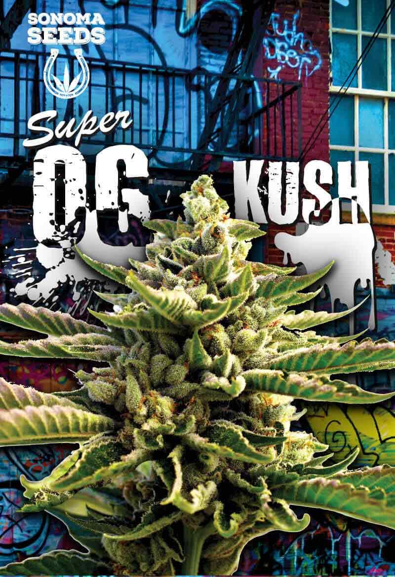 Super OG Kush Feminized Seeds