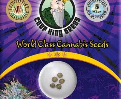 White Widow Autoflower Seed Opt 405x330